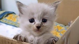 Кошка машка  обожает  дыню )  котята  уже бегают .наша кошка с деревни.