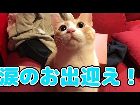 旅行から帰ってきた飼い主を泣きながら出迎えてくれる猫たち!
