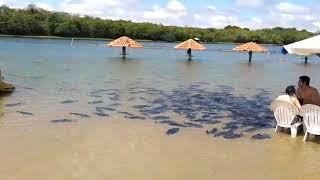 Peixes na beira do Rio