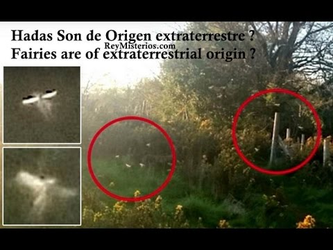 Fairies are of extraterrestrial origin