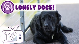 Dog TV - Television for Lonely Dogs! Calm Your Lonely Dog and Keep Them Entertained!