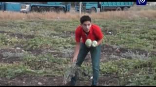 أهمية الغطاء النباتي - محافظة إربد