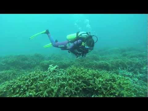 Surveying Tomuk reef on Tioman, Malaysia