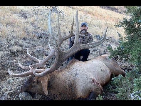 Public Land Giant Bull Elk- Idaho Highlights- Incredible Elk Footage [4K]