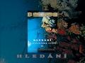 Hledání křišťálového světa - Obr zvaný Jewfish  | celý film