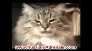 Кошачьи приколы. Забавные эпизоды с кошками и собаками