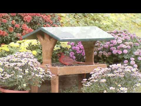 Wild Birds Unlimited - EcoTough® Covered Ground Feeder