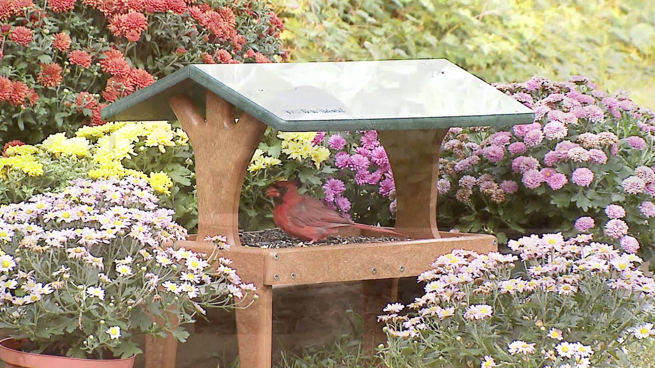 Wild Birds Unlimited Ecotough 174 Covered Ground Feeder