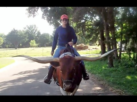 Riding Texas Longhorn Saddle Cow PREMIER ASTORIA