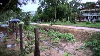 Suriname mijn thuisland 2