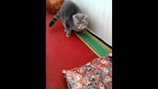 Способ позлить кота!