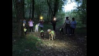 Educa Patte - Marche cani-nocturne du 6 août 2021