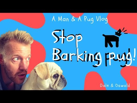 How To Stop Your Pug / Dog Barking!