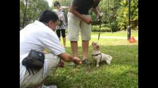 Basic Obedience Foundation Classes