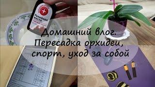 Домашний влог. Пересадка орхидеи, спорт, уход за собой(Добро пожаловать на мой канал! Если вам интересны видео о жизни в Стамбуле, подписывайтесь. Обещаю баловать..., 2014-10-24T09:00:01.000Z)