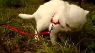 Кот ест травку...!!!