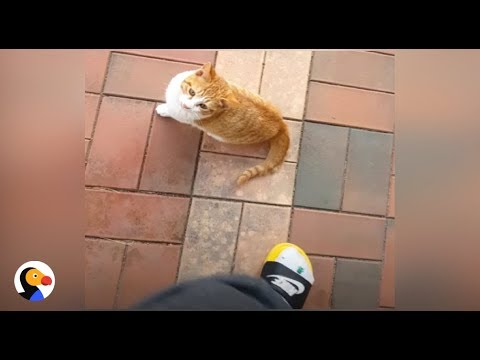Cat Keeps Following Kid to Class | The Dodo
