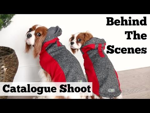 Behind The Scenes: Go Fresh Pet Catalogue Photoshoot   Herky & Milton Cavalier King Charles
