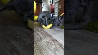 Фото Обезянки с бананом
