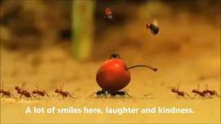 Детский клип о муравьях Чикосах