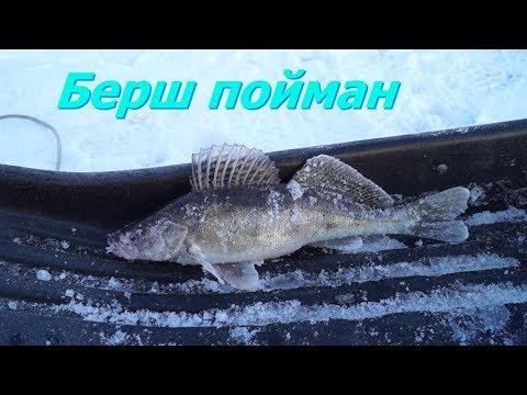Рыбалка на берша Юрьевец у креста 11.01.2020