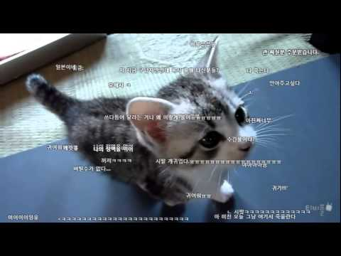 [티비플]울음소리가 귀여운 새끼 고양이