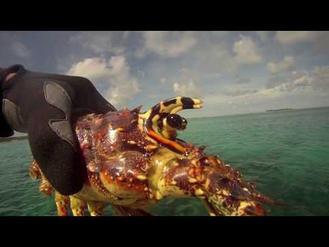Speaing Lobster in the Bahamas, Rose Island, GOPro Edit