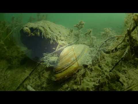 Podvodni svet Ade Ciganlije