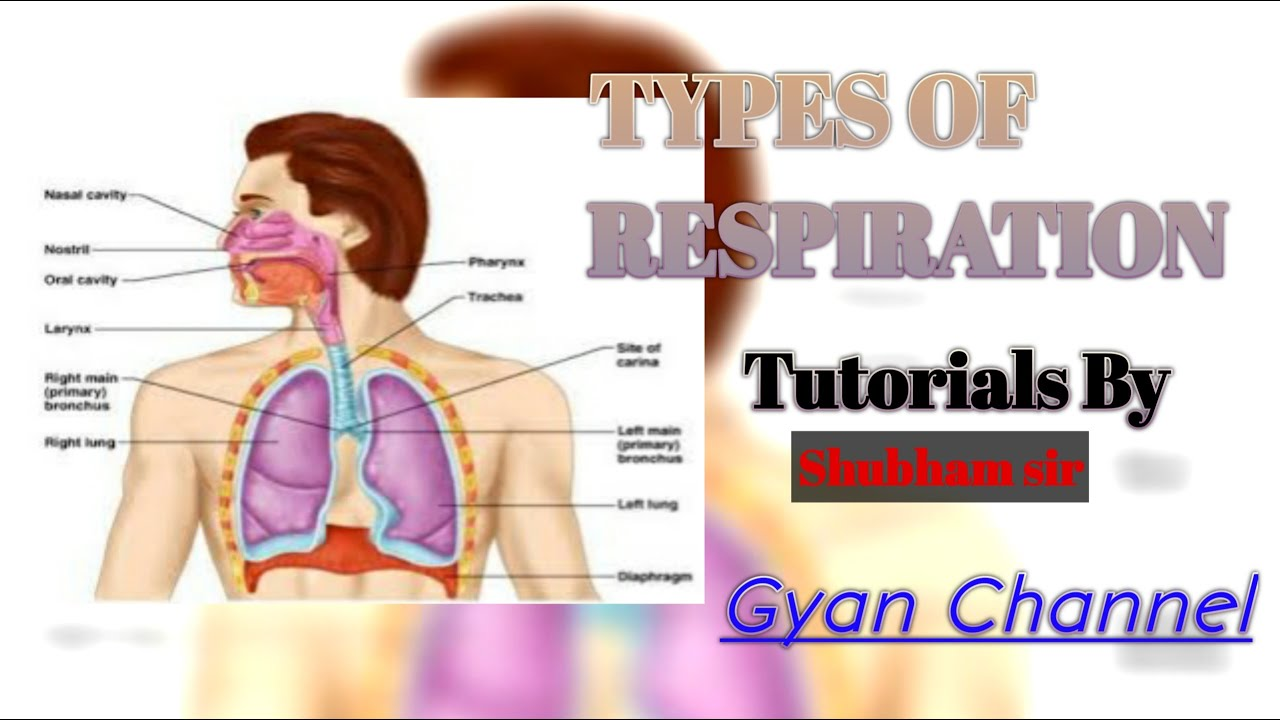 6.12 A | Types of respiration | Chapter 6 | Class 10 ...