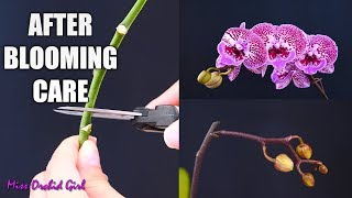 Orchid Care for Beginners - What to do after Phalaenopsis blooms fall? Cutting spike & aftercare