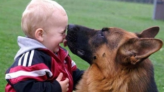 Baby Playing with German Shepherd Dog | There