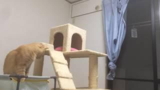 挑戦する猫 Challenging cat『保護猫るる らら物語』 thumbnail