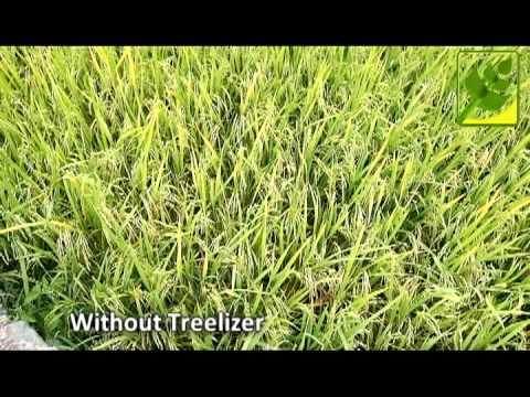 Treelizer Rice Field Comparison