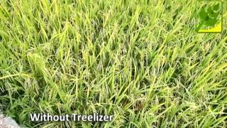 Treelizer Rice Field Comparison