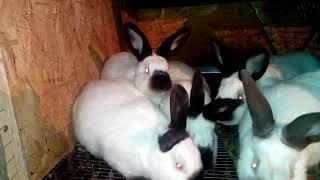 Наши кролики. Обзор клеток кормушек и поилок