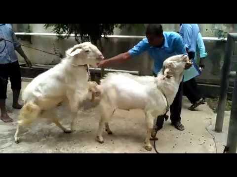 Bear ejaculating and eating his own semenKaynak: YouTube · Süre: 29 saniye