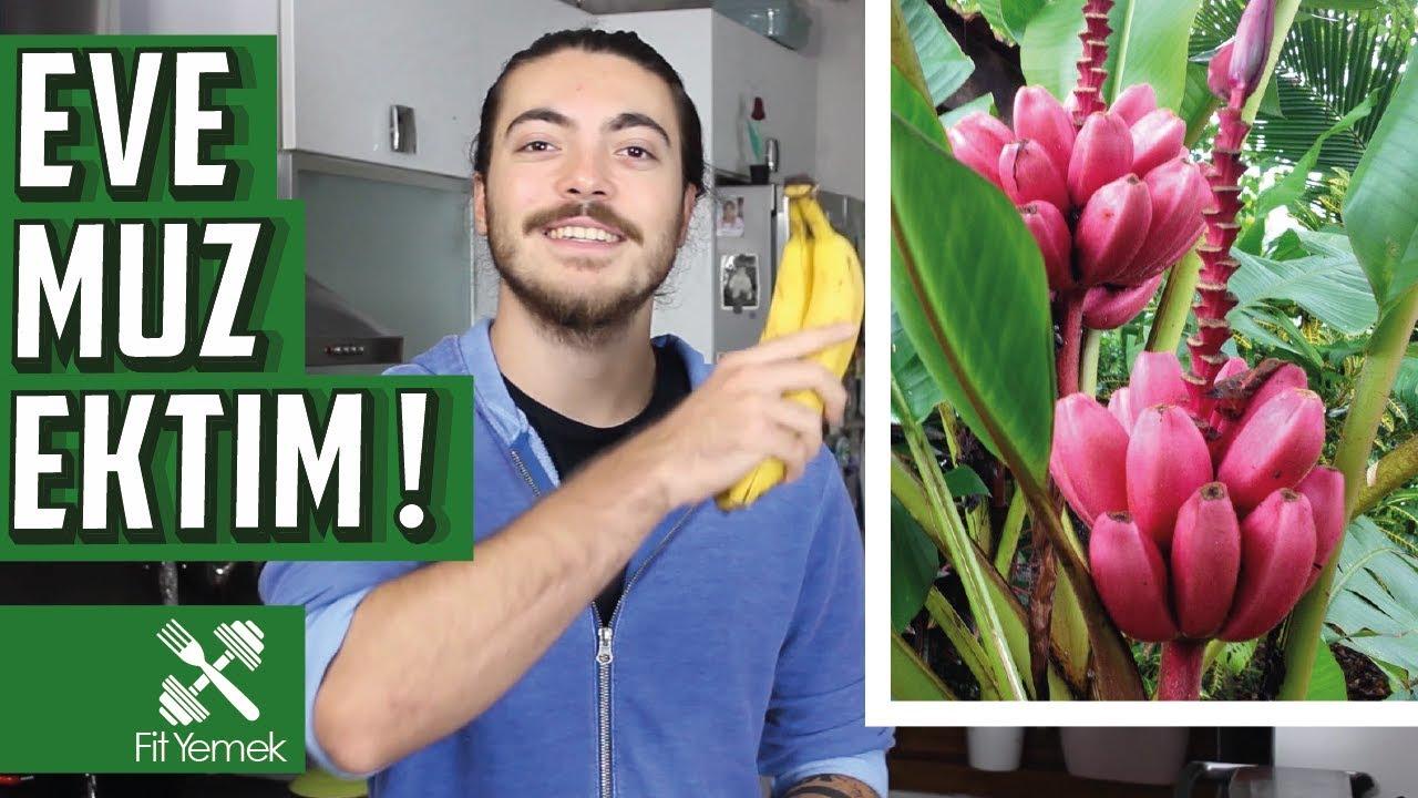 Evde Pembe Muz Yetiştirmek Fityemek Youtube