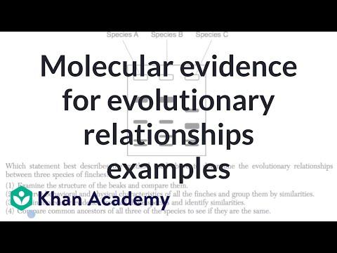 Molecular evidence for evolutionary relationships examples | High school biology | Khan Academy