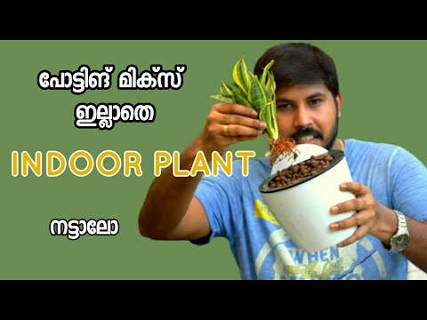 How To Pot Indoor Plants With Out Potting Mix Only Using Clay Ball..2nd Part Video