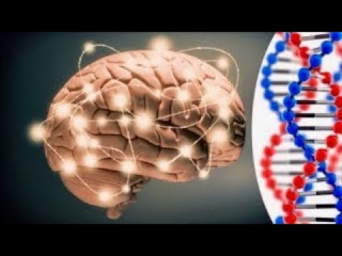 Smart Genes Scientists Discover Genes Linked To Human Intelligence