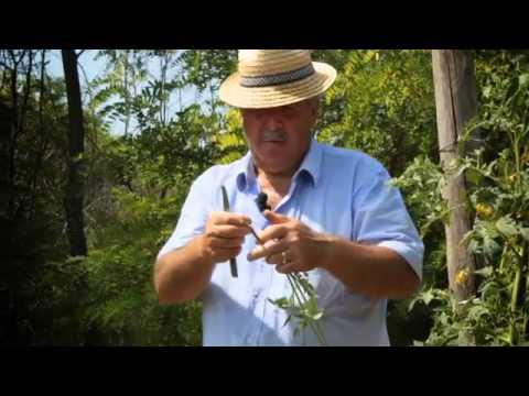 Un Espediente Creativo Per Il Trattamento Dei Pomodori