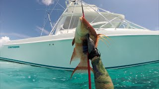 Spearfishing the Bahamas 2015:  Into the Element 2.0