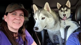 Start of the Husky Road Trip to California | Travel Vlog