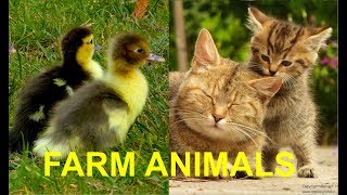 FOR KIDS: Baby animals on the farm, with their natural sounds - cute foals, chicks, calfs, piglets