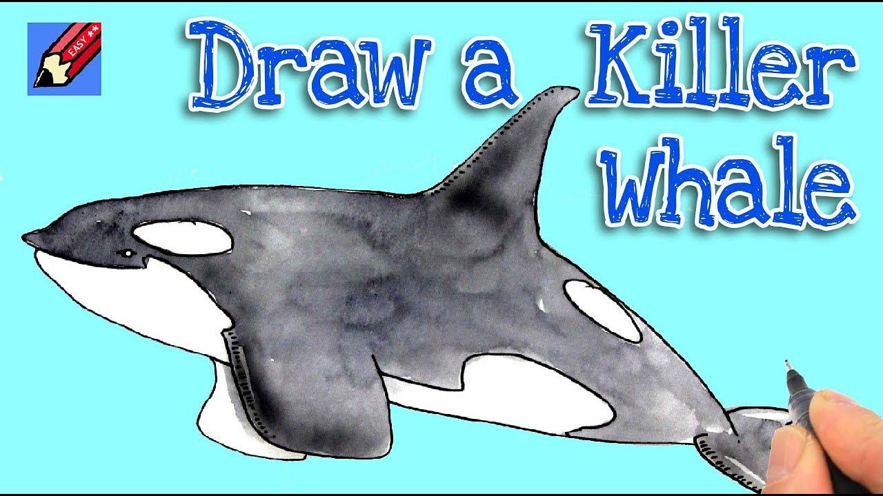 How To Draw A Killer Whale Real Easy Youtube