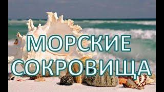 Красивые РАКУШКИ - морские СОКРОВИЩА. Поделки своими руками ДЛЯ ВДОХНОВЕНИЯ