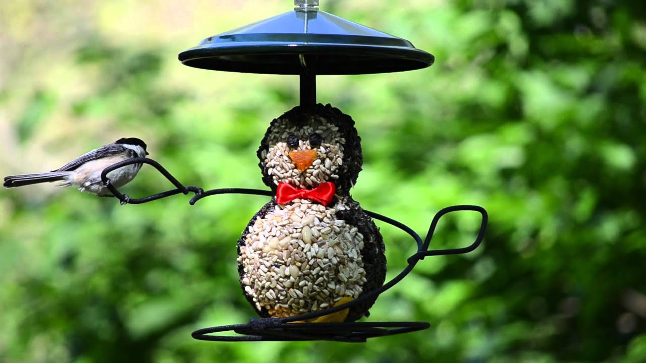 and not unlimited hawks of here story many your birds old feeders life on bird might tube food why at s seeing cats variety feeder