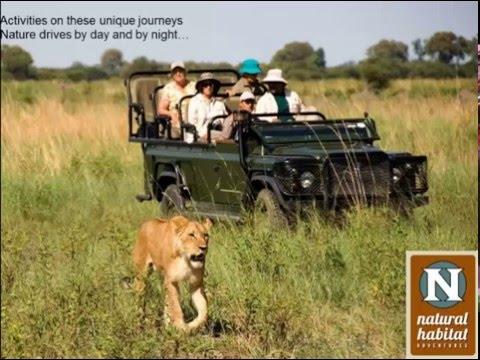 WEBINAR | Botswana: A Quintessential African Safari Destination
