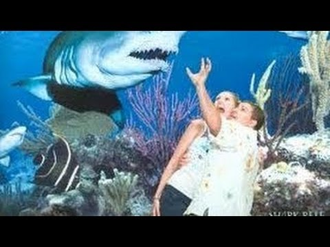 how to cancel mandalay bay shark reef tickets
