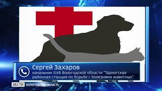 Руководство ветстанции в Тарноге опровергло сообщение о закрытии учреждения